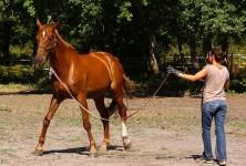 Petit traité d'équitation éthologique (par Matthieu Gosztola)