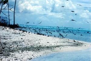N'oublie pas les oiseaux..., Marguerite Clerbout