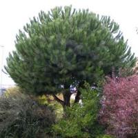 Sa plus belle rencontre avait été un arbre (par Sandrine Ferron-Veillard)